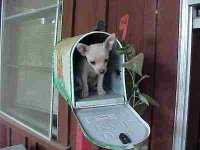you got mail.jpg