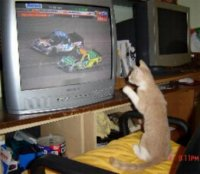 NASCARKitty.JPG