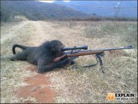 shooting gorilla.jpg