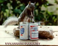 squirrel_beers.jpg